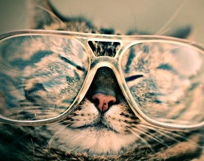Chat lunettes