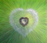Connexion au coeur